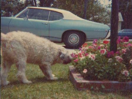 Waybac.1972.Lulua