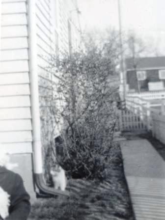 Waybac.1951.mah1