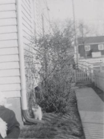 Waybac.1951.mfy2