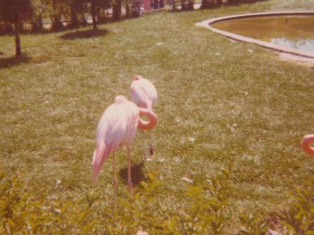Waybac.1976.iz4