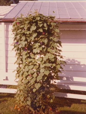 Waybac.1979.08.mgggb1