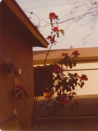 Waybac.1979.12.citc2