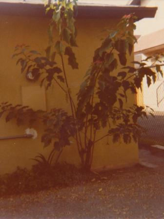 Waybac.1979.12.mmw1