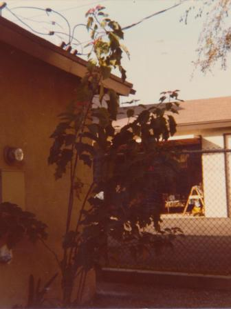 Waybac.1979.12.mmw2