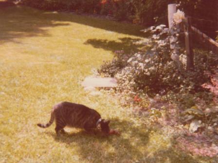 Waybac.1980.05.zok