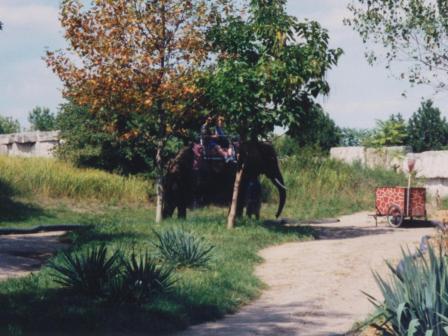 Waybac.1997.07.miz5