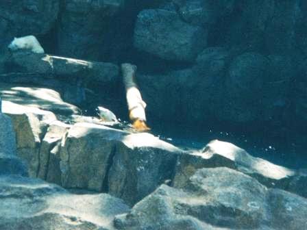 Waybac.2001.05.mcaz04