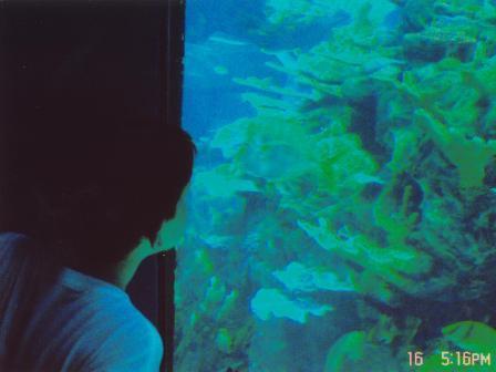 Waybac.2004.06.wdw503